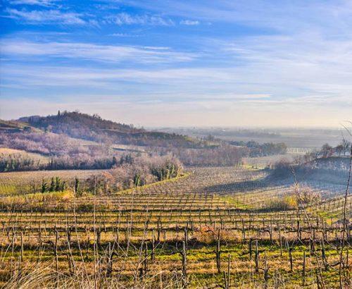 Taste of Friuli
