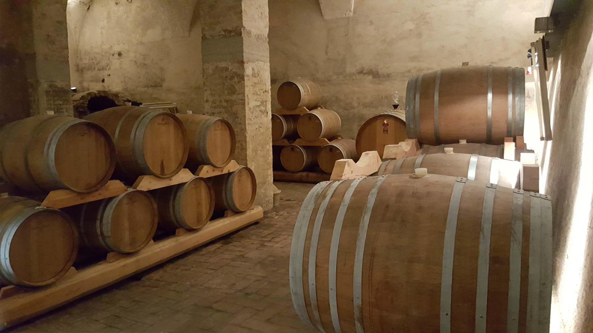 Encounter our outstanding wines and winemakers | Venice Day Trips